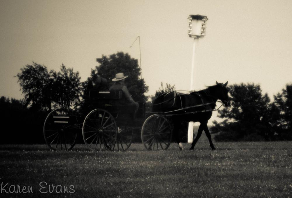 Photo in Black and White #people #country life #horse and buggy