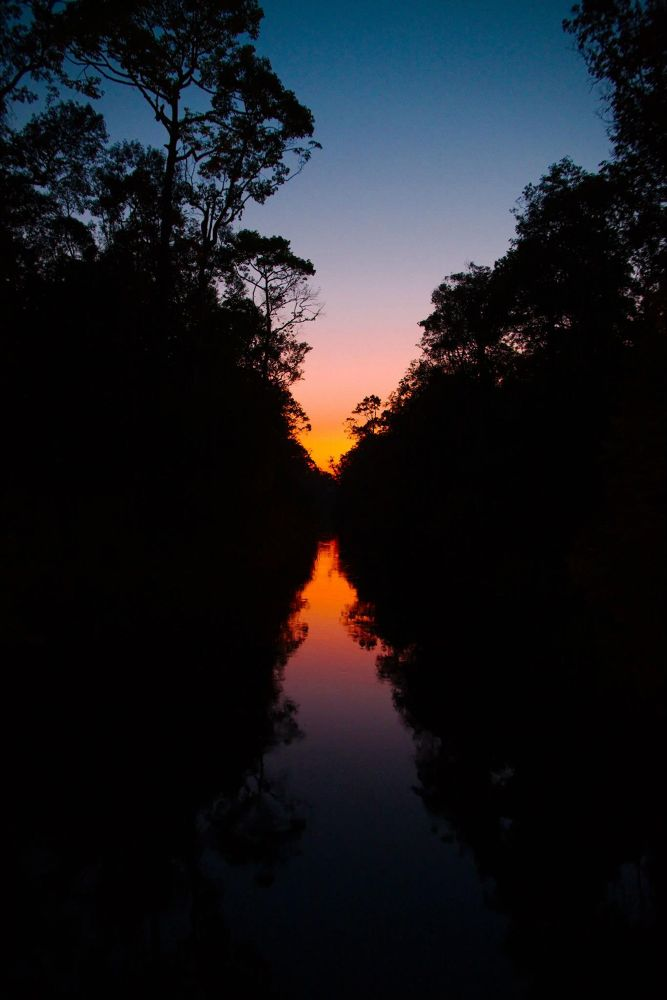 Photo in Random #nature #landscape #kalimantan #borneo #tour #travel #orangutan