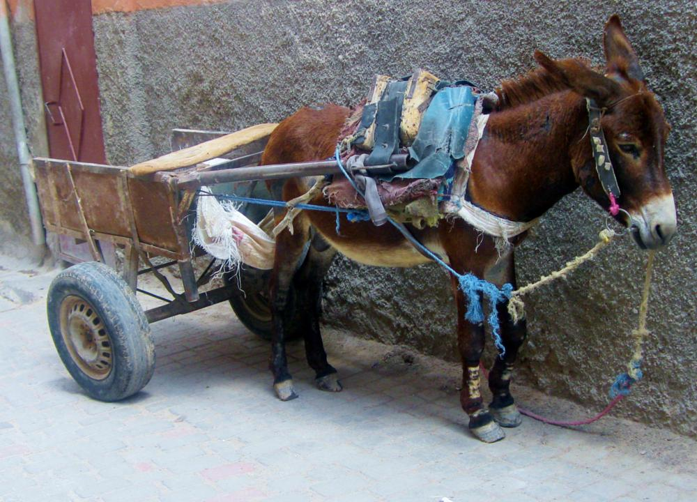 Photo in Street Photography #morocco #mule #donkey #streetcontest