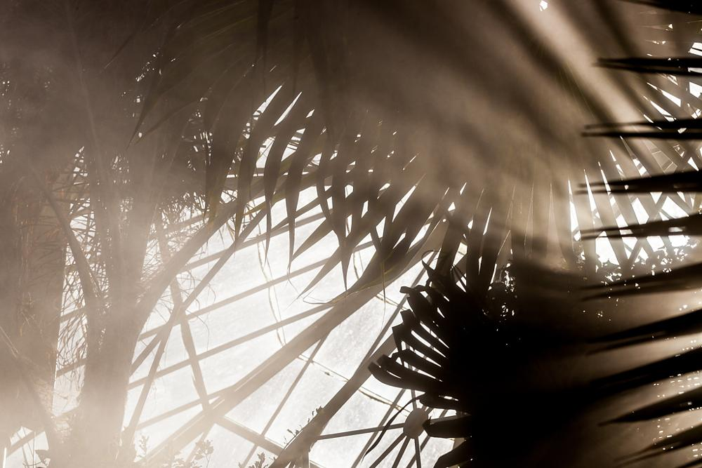Photo in Random #palm house #botanic gardens #mist #glasshouse #garden