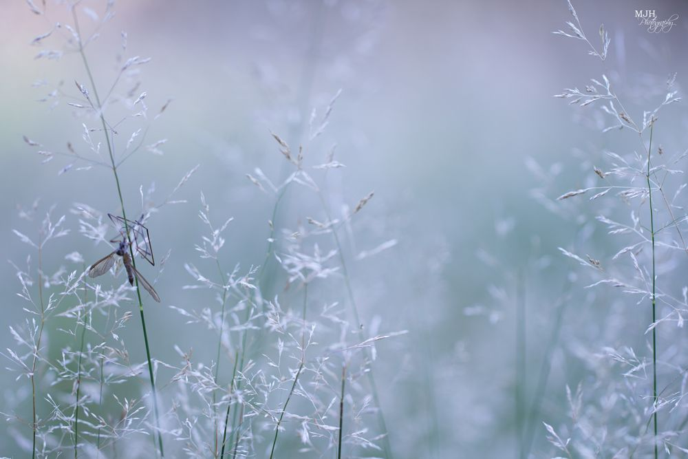 Photo in Nature #nature #bokeh #dof #grass #soft #magical