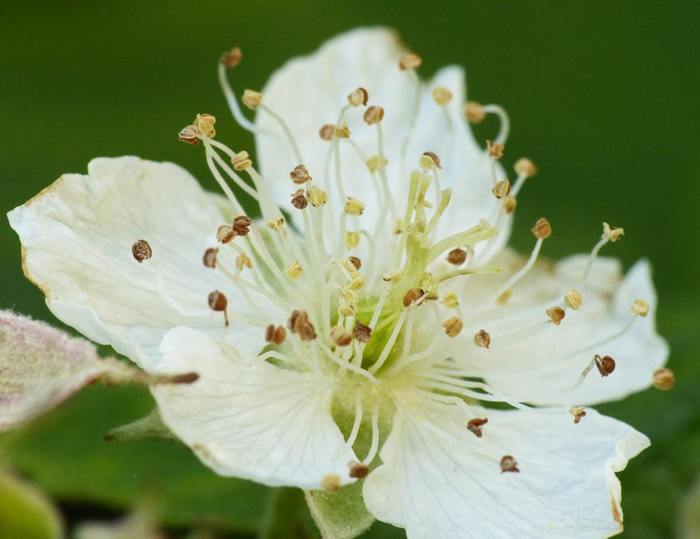 Photo in Macro #nature #flower #pistils #macro #detail #closeup