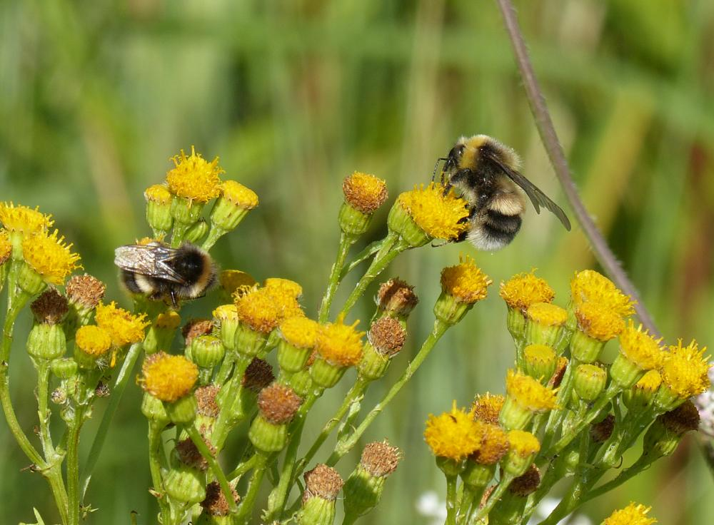 Photo in Macro #nature #flowers #bumblebee #insect #macro #detail #closeup