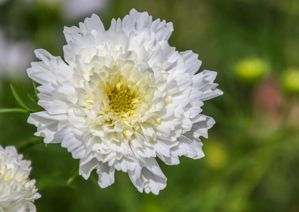 Photo in Nature #flower #sun #gardens #bath