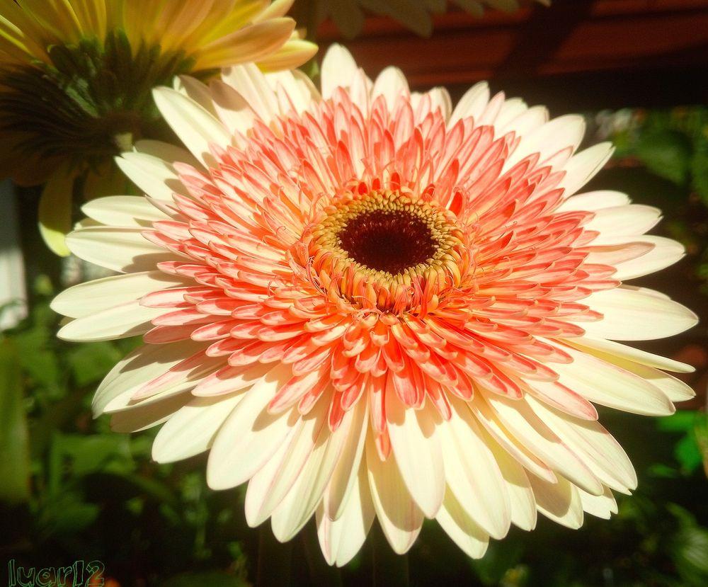 Photo in Nature #flor #cor #jardim #natural