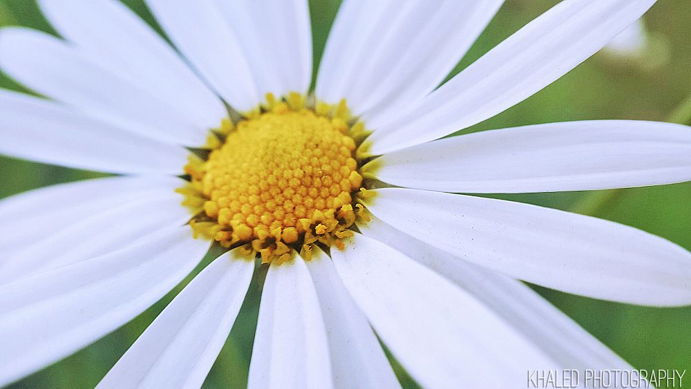 Photo in Abstract #flower #yellow #white