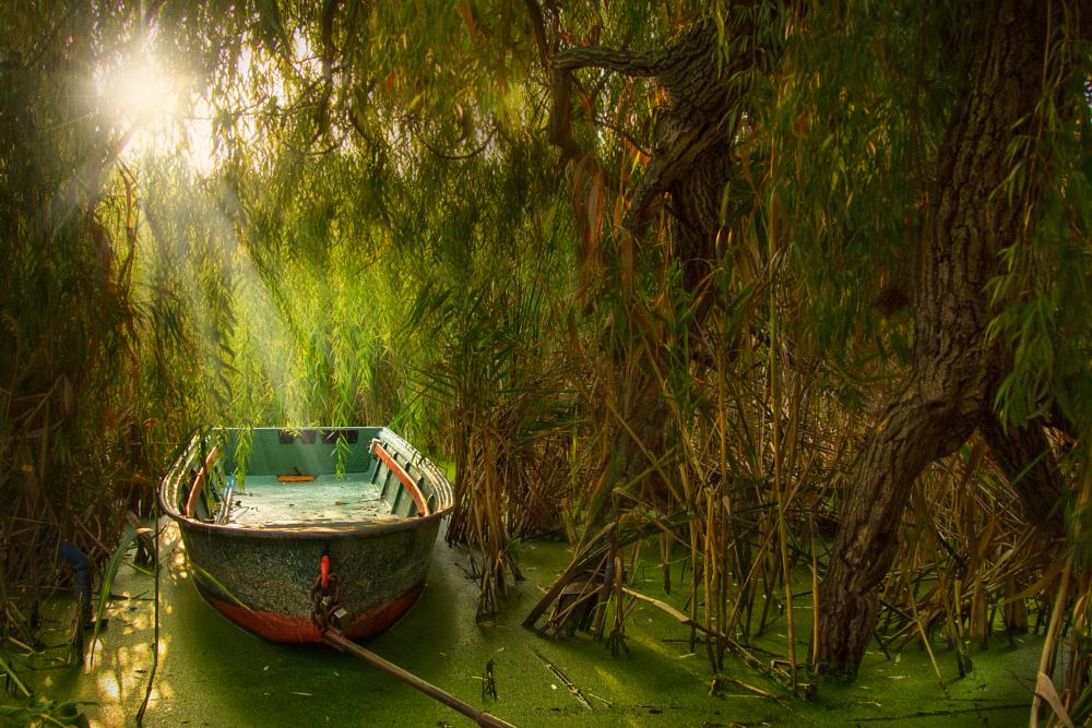 Photo in Landscape #water #river #riverside #leafs #reeds #trees #sky #clouds #sun #sunrise #sunset #nature #animal #fish #birds #boat #ship #landscape