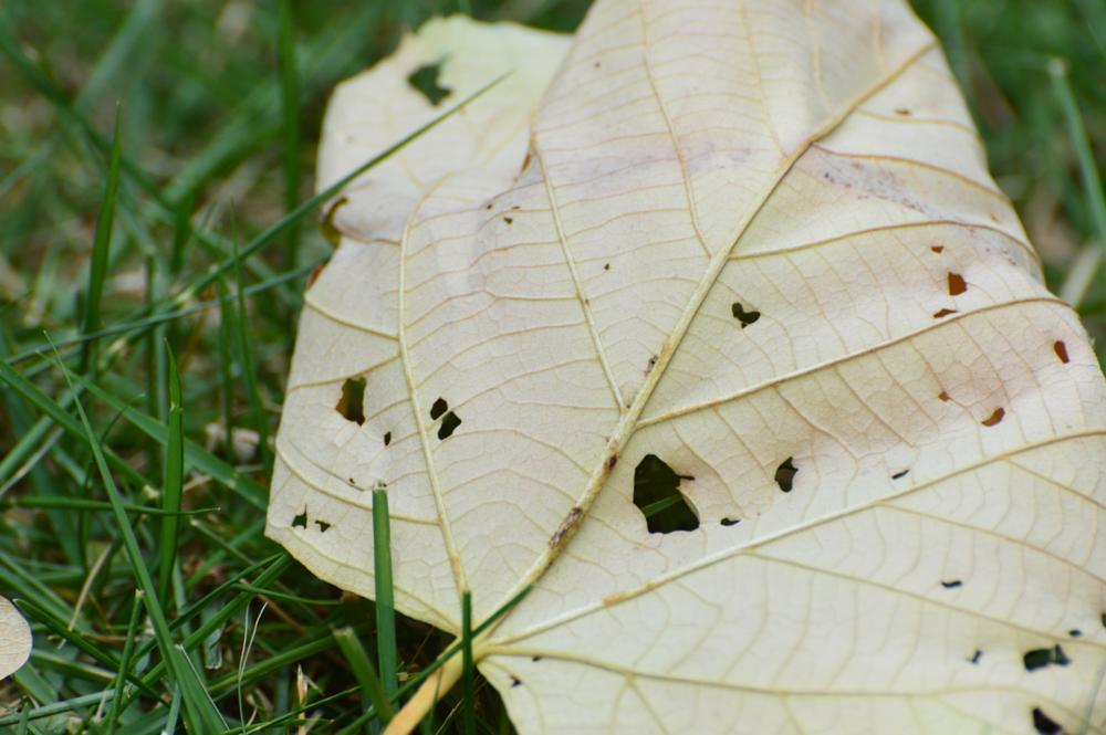 Photo in Nature #leaf