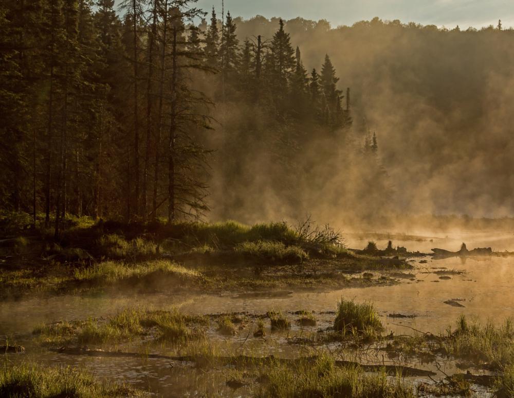 Photo in Landscape #algonquin park #nature #sunrise #mist #beaver pond #morning #misty morning #scenery #outdoor #landscape