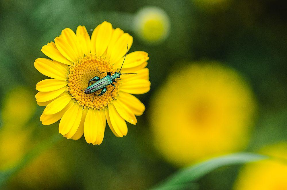 Photo in Nature #insecte #fleur #jaune