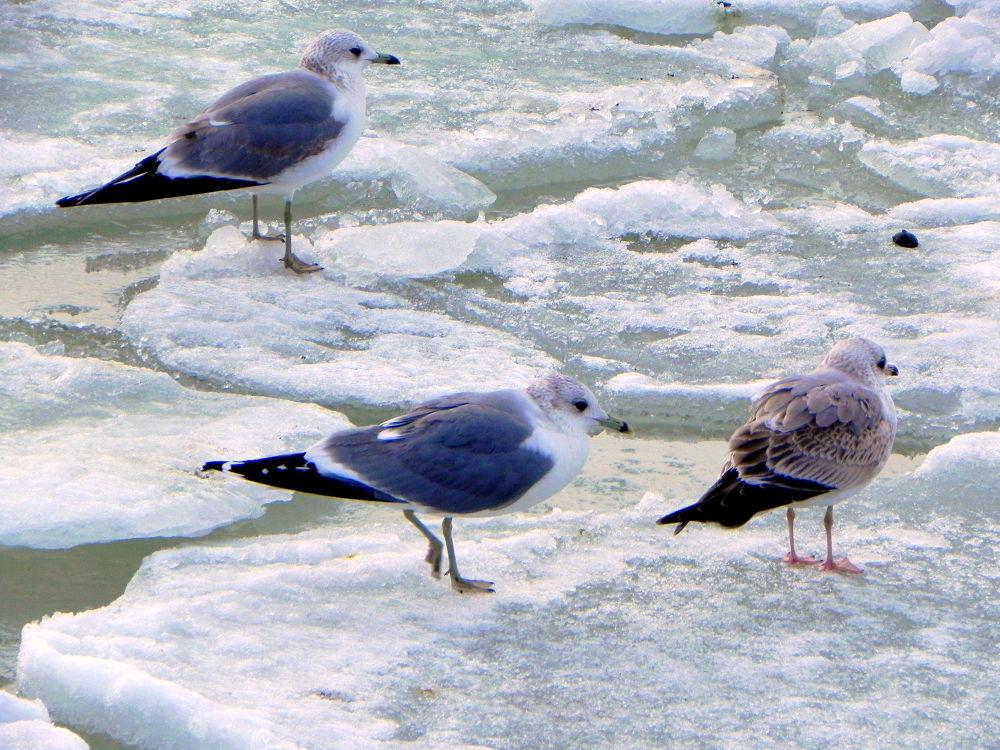 Photo in Random #seagulls