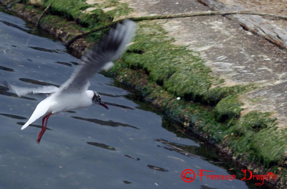 Photo in Animal #gabbiani #mare #uccelli #animali #mondello #palermo #italia