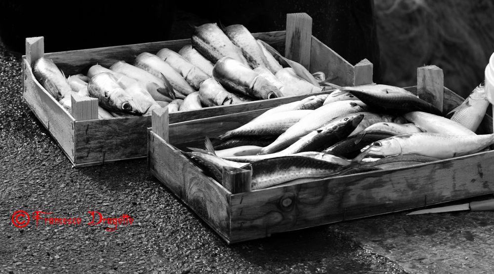 Photo in Black and White #bianco e nero #pesce #sicilia #palermo #italia