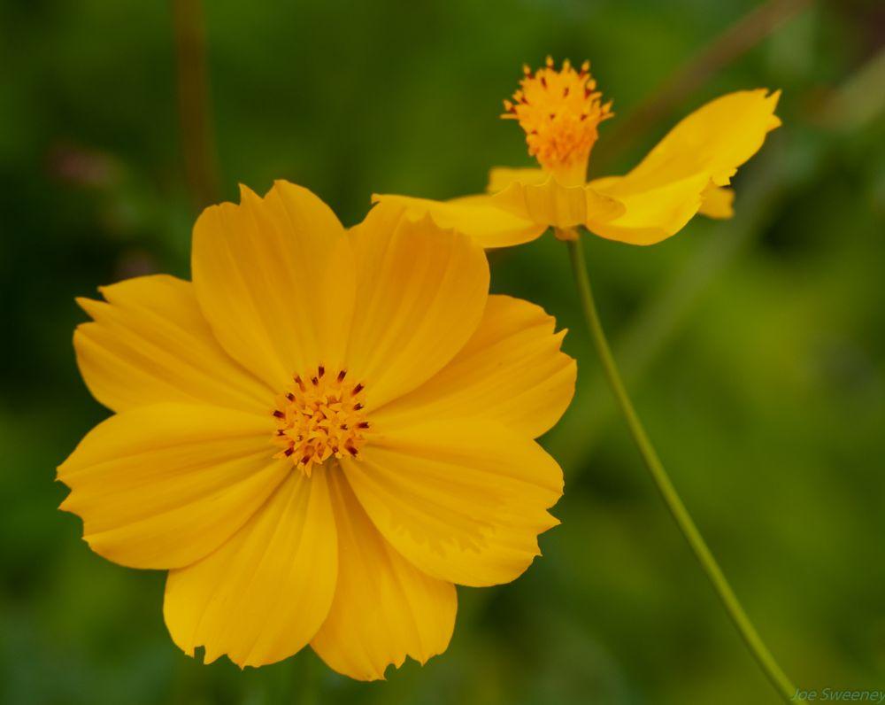 Photo in Nature #flower #yellow #botanical #garden #florida
