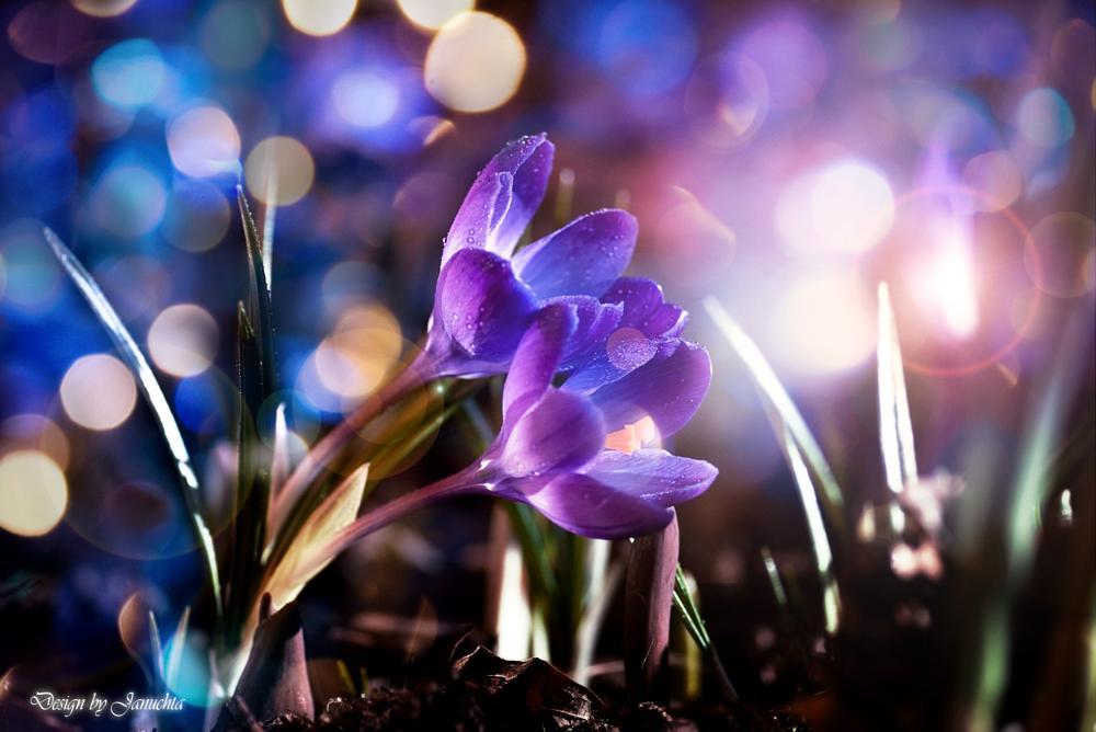 Photo in Macro #design by januchta #kwiaty fotografia januchta #fotografia januchta #fotograf lębork