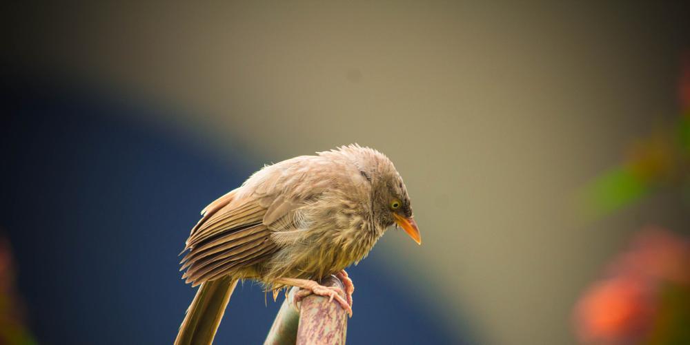 Photo in Animal #birds #bird #nature #bulbul #wildlife #animal