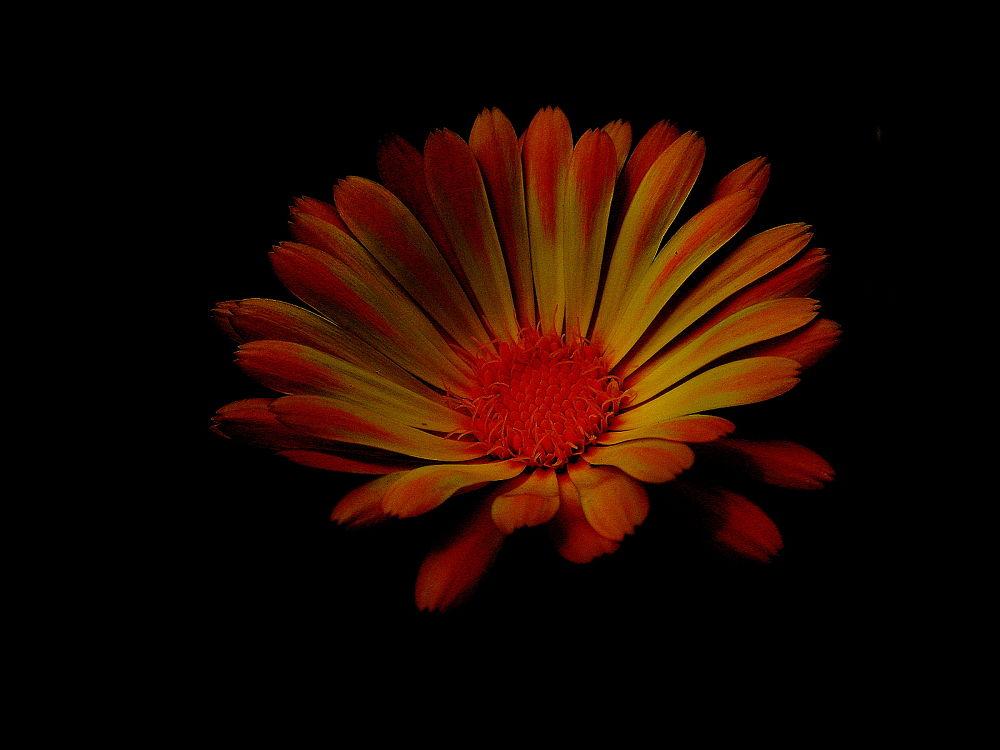 Photo in Nature #floral #flower #orange #yellow flower
