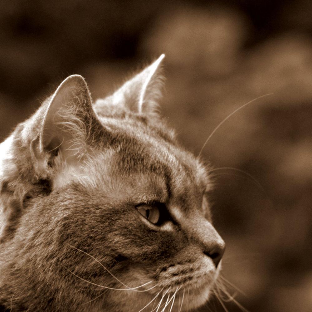 Photo in Animal #cat #feline #cat portrait