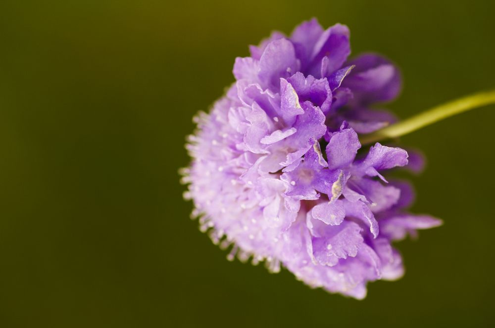 Photo in Nature #flower #flora #lilac flower #lilac #nature