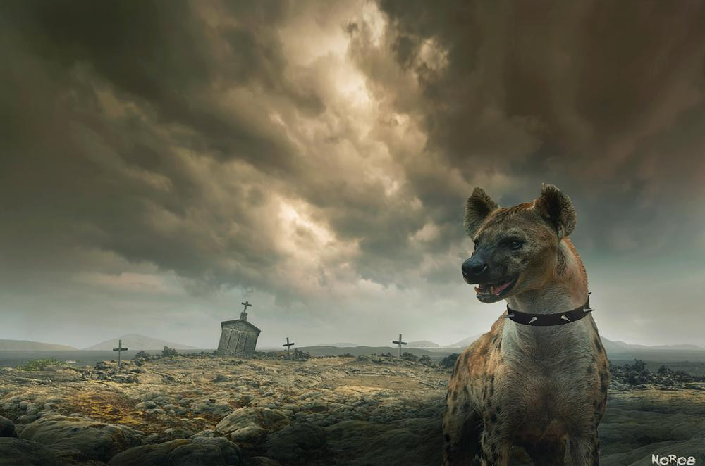 Photo in Animal #pet #hyena #future #feeding #tombs #crosses #apocalypse #postapocalypse #land #scenery #processing #photoshop #brushes #noro8 #style #cool