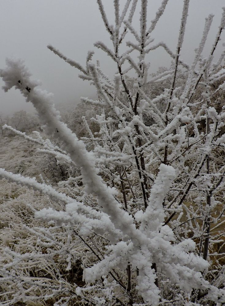 Photo in Nature #nature #winter