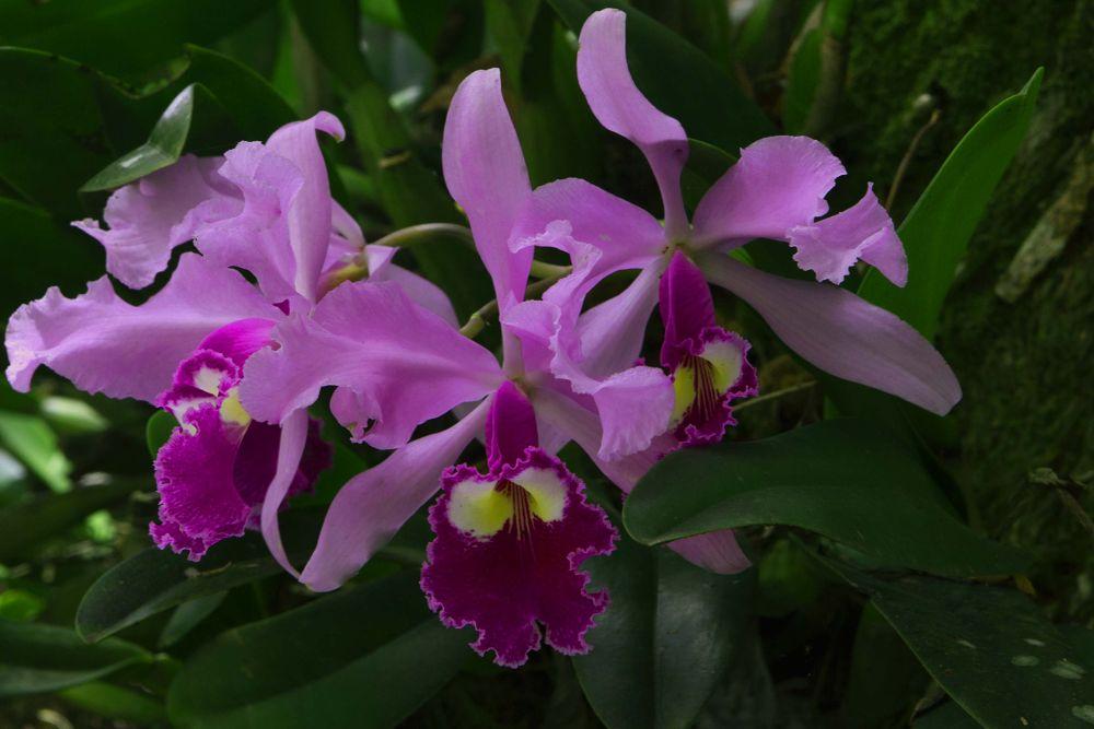 Photo in Random #orquidea #colombia #quindío #andoni leunda #flor nacional de colombia