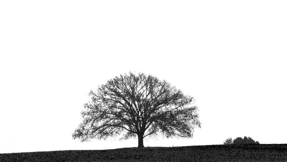 Photo in Black and White #landscape #nature #botanical #black/white