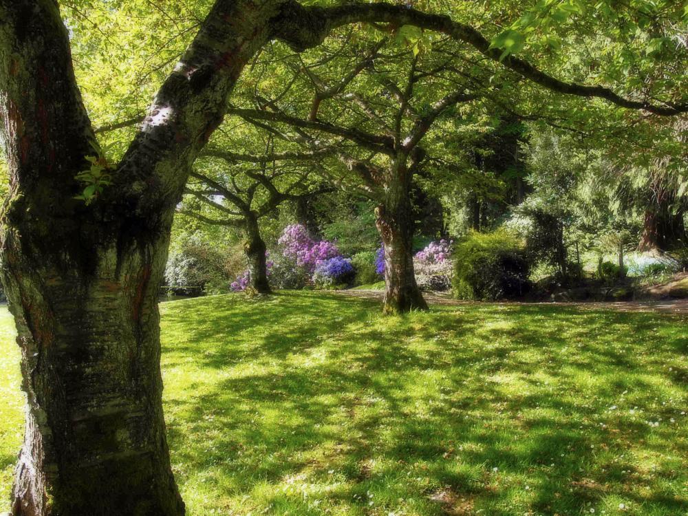 Photo in Landscape #stanley #park #recreation #nature #city park #vancouver #landscape #trees #flowers