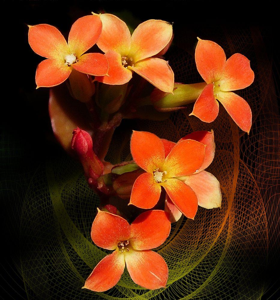 Photo in Macro #flower #plant #orange #bud #close up