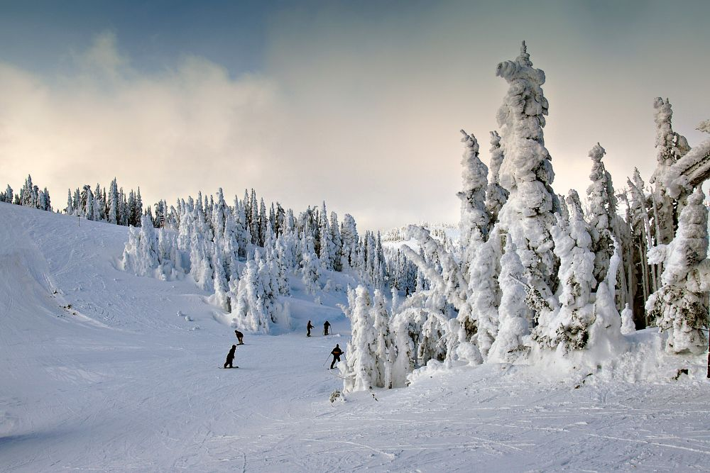 Photo in Landscape #skier #sport #mt todd #winter #snow #activity #cold #mountain #trees #nature #landscape