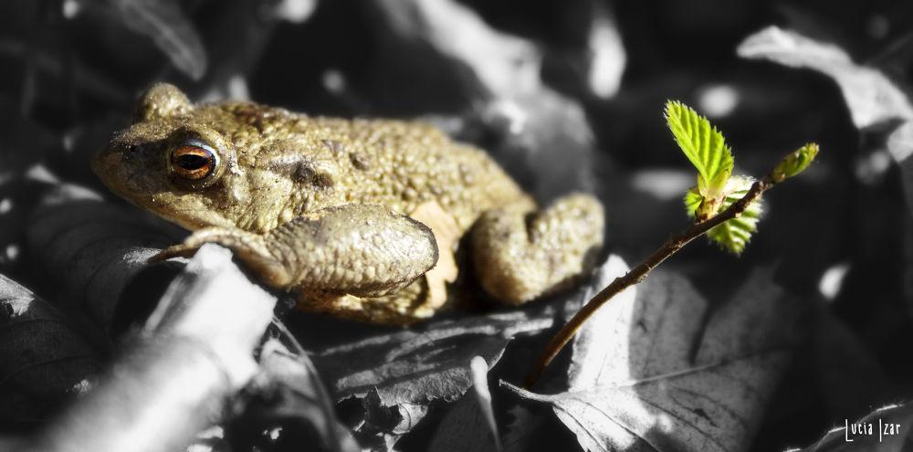 Photo in Animal #frog #animal #green #wood
