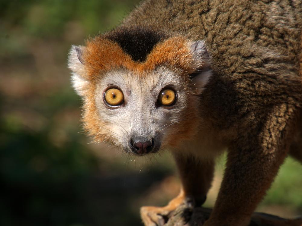 Photo in Random #avifauna #animal #eyes