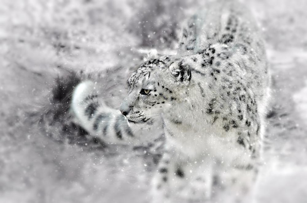 Photo in Animal #animal #cat #outdoor #wildlife