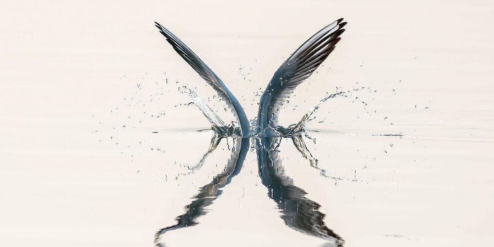 Photo in Animal #angel #wing #gull