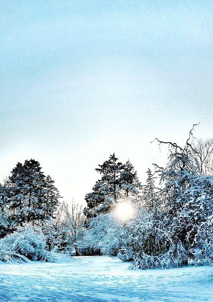 Photo in Landscape #winter #seasons #iowa #iowa park #iowa winter #sunset #sunset between the trees #winter sunset #landscape #winter landscape #snow #snowy #nature #walk in the park #park #trees