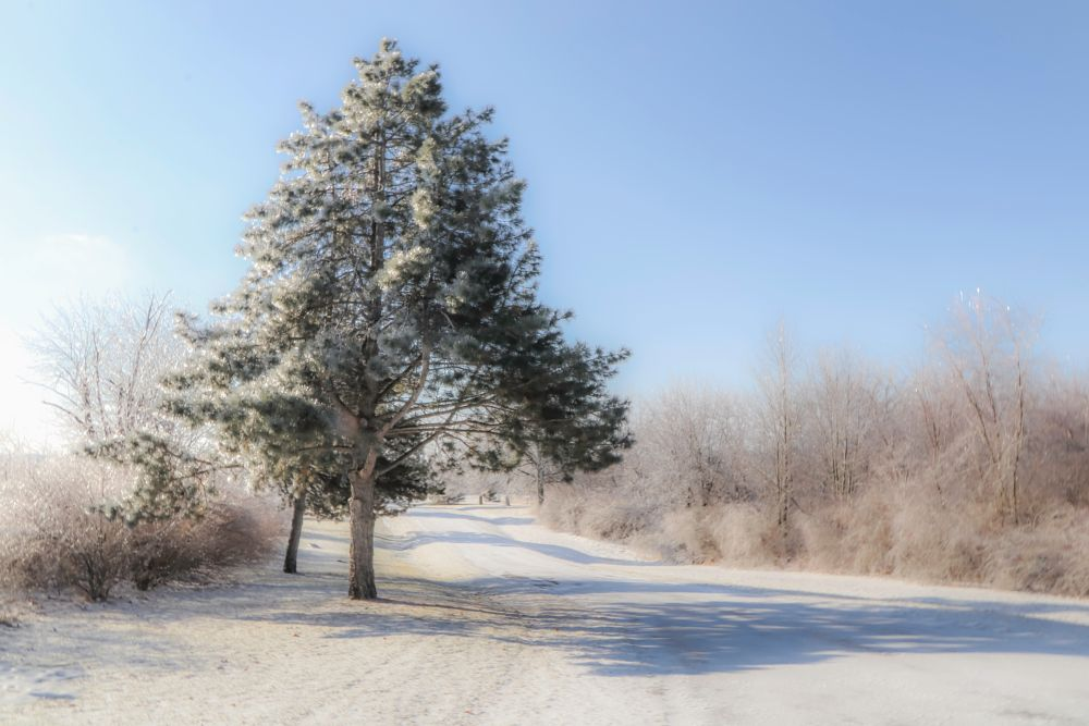 Photo in Nature #snow #winter #ice #frost #trees #road #sky #focus