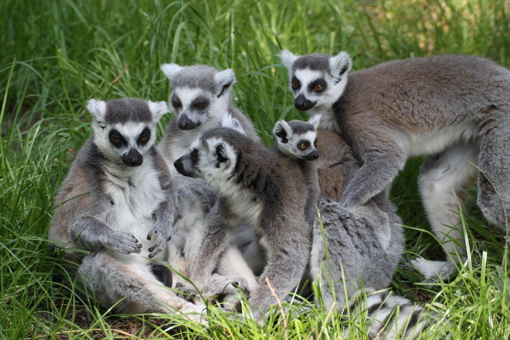Photo in Random #family liama animal pets