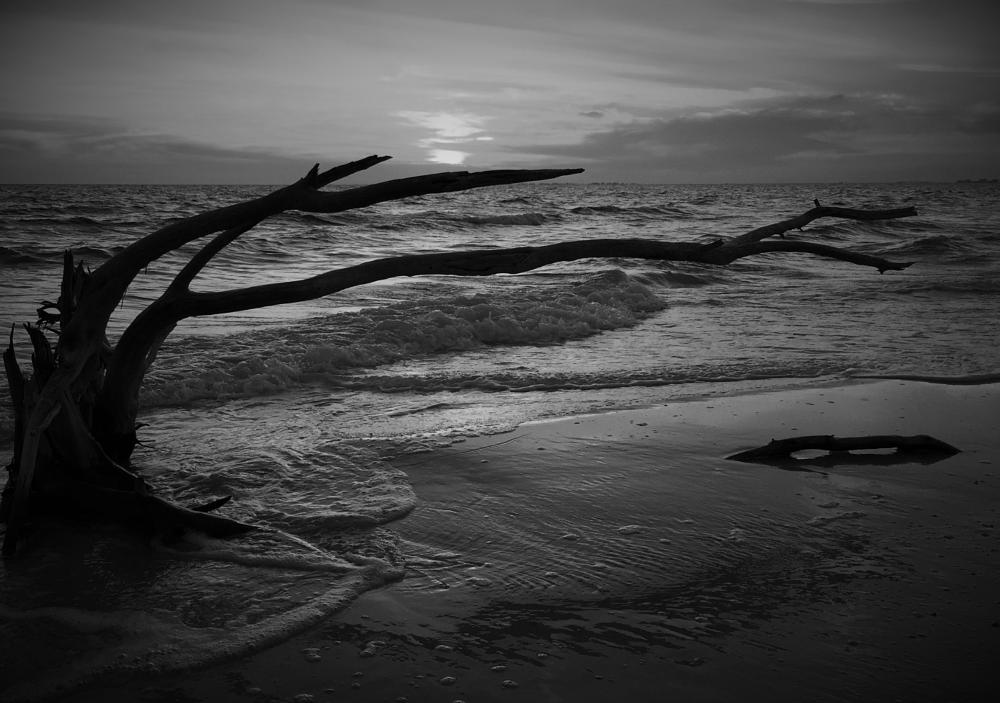 Photo in Landscape #driftwood #silhouette #beach #sunset #water