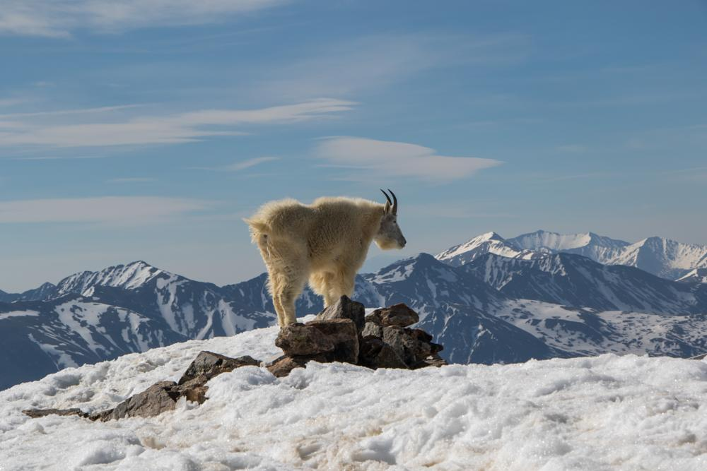 Photo in Animal #animals #nature #wildlife #landscape #outdoors