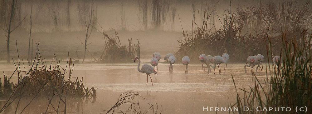 Photo in Nature #ypa2013 #flamingo #sunrice #south africa #lagoon #lake