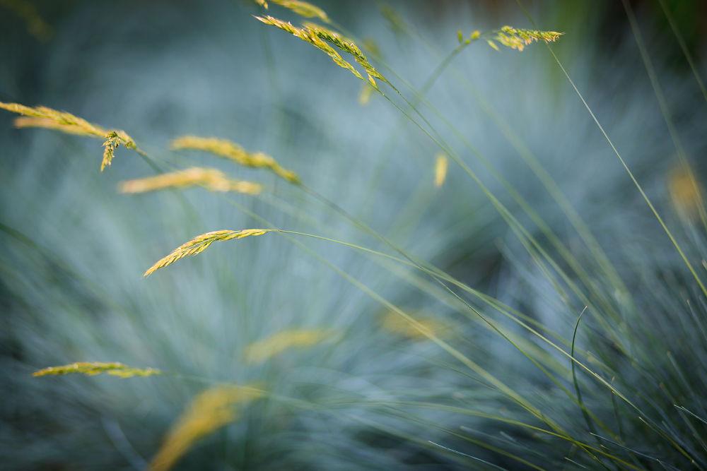 Photo in Landscape #ypa2013