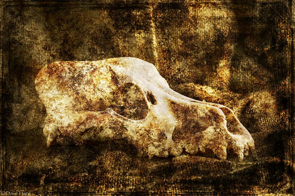 Photo in Animal #skull #sheep #jaw #dead #death #sack #sackcloth #teeth #davehare #dave hare #david hare