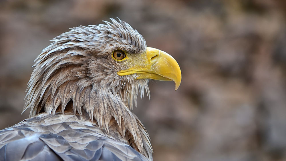 Photo in Animal #eagle #portrait #raptor