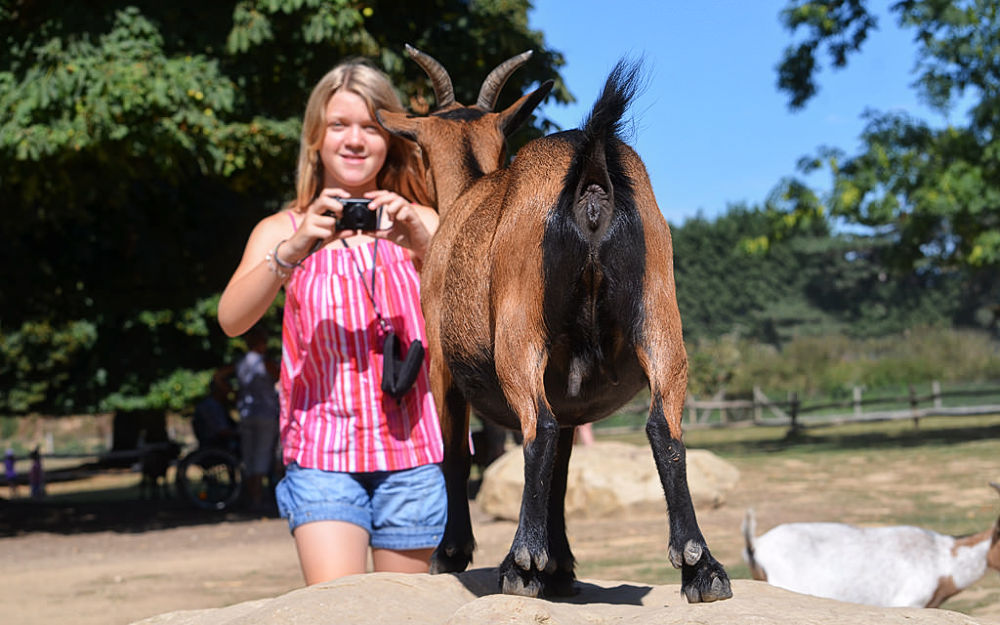 Photo in Animal #photographer #goat #rear #side
