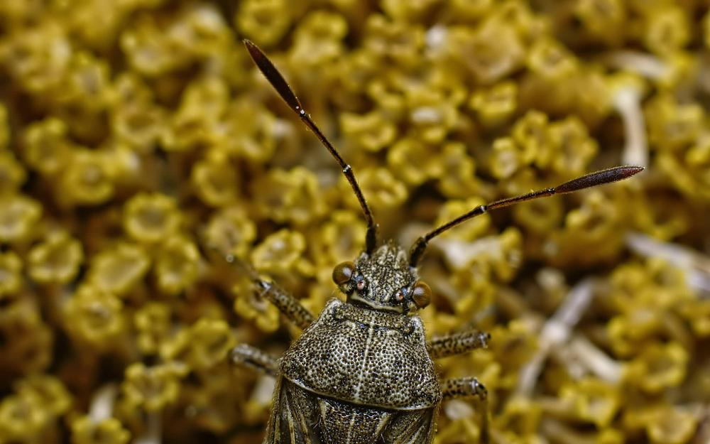 Photo in Macro #bug #macro #garden #portrait #clodeup #lumix #g1