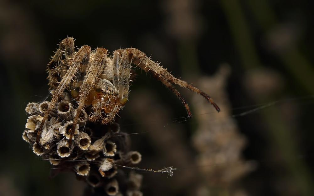 Photo in Macro #spider #hidden #color #macro #closeup #lumix #g1
