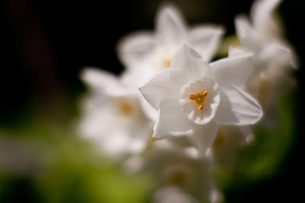 Photo in Nature #flowers #flower #macro #macroflower #dof #bokeh #japanese #macro_perfection #natureonly