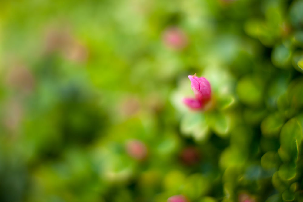 Photo in Nature #flower #flowers #macro #macroflower #dof #bokeh #japanese #macro_perfection #natureonly