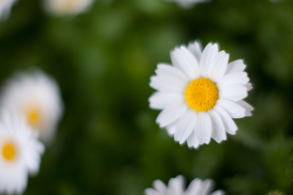 Photo in Nature #flower #flowers #macro #macroflower #dof #bokeh #japanese #macro_perfection #natureonly