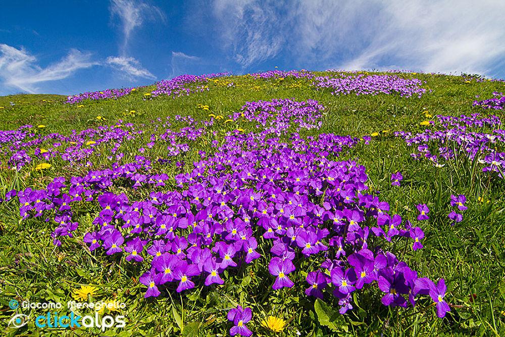 Photo in Landscape #fiori #flowers #landscape #paesaggi
